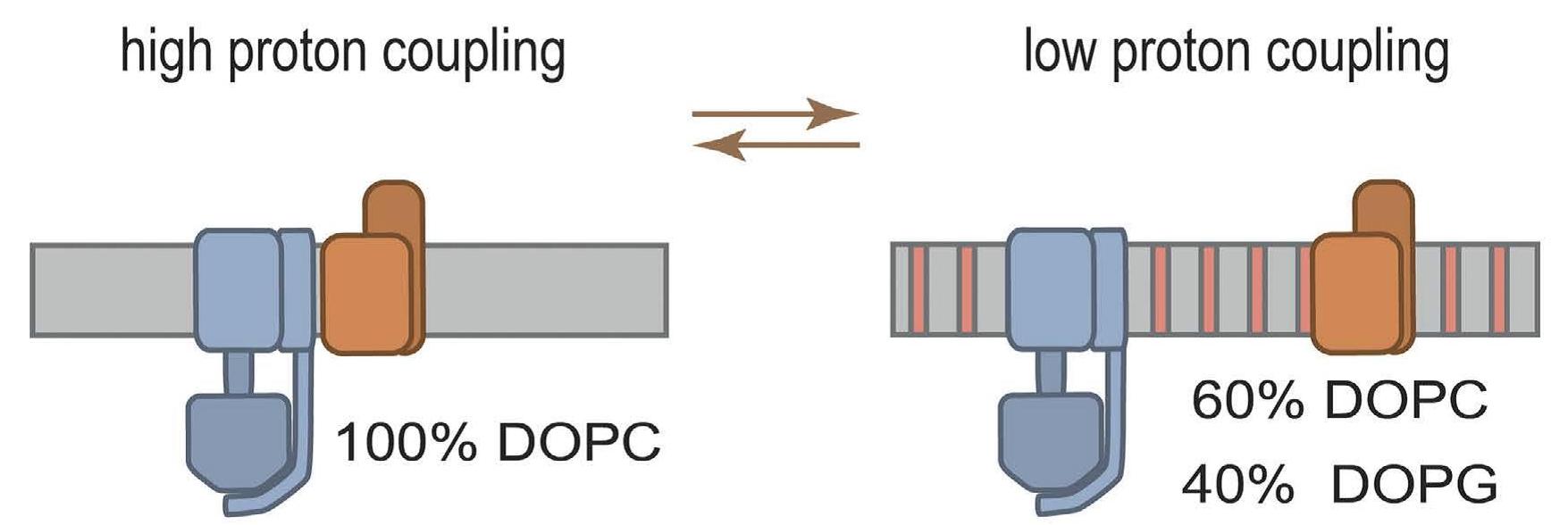 Proton coupling scheme